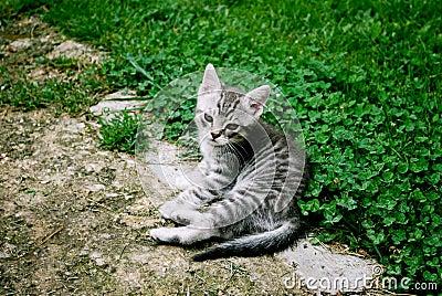 Baby Kitten Staring