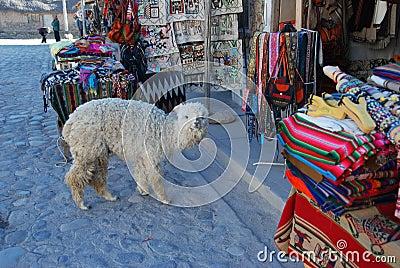 Baby lama near souvenir stand