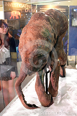 Baby Mammoth of the Ice Age Exhibition in H.K. Editorial Stock Photo
