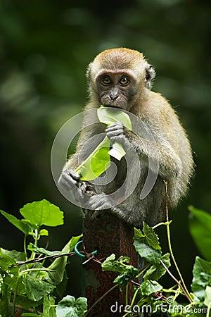 Free Baby Monkey Royalty Free Stock Photo - 14043195
