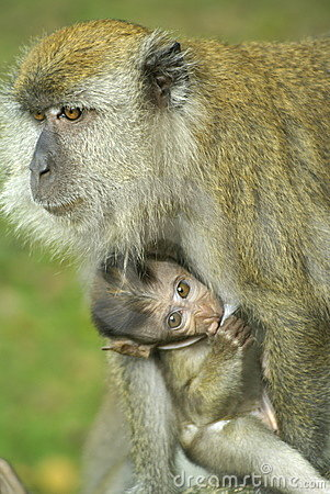 Free Baby Monkey And Mom Stock Photography - 3809362