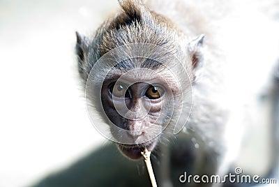 Baby monkey eyes staring