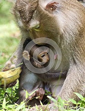 Free Baby Monkey Hugs Mom Stock Image - 11760901