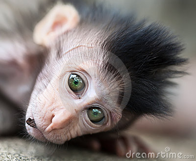 Baby monkey portrait