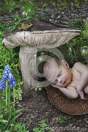 Free Baby Newborn Elf Sleeping Under A Mushroom With Fairies In Wonderland Stock Images - 83512964