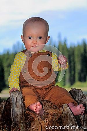 Free Baby On Stump Stock Photo - 59231010