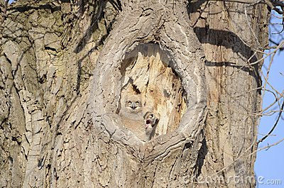 Baby owls in tree