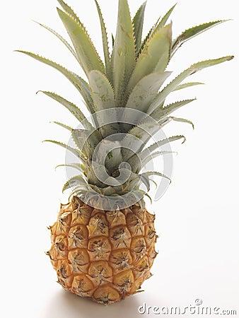 Free Baby Pineapple Royalty Free Stock Image - 7675686