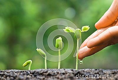 Baby plants seedling