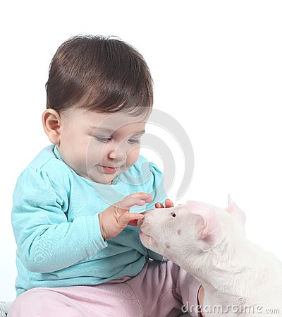 Baby playing with a bull terrier puppy