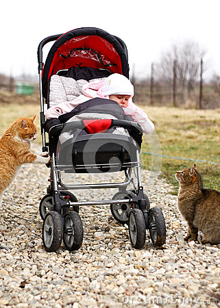 Baby in pram and two cats