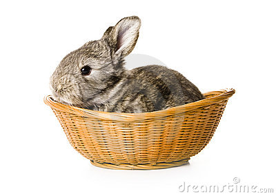 Baby rabbit in a basket
