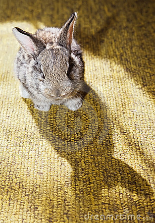 Baby rabbit on the carpet with its own shadow