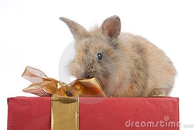 Baby rabbit on a present
