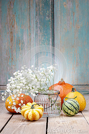 Baby s breath (gypsophilia paniculata) and colorful pumpkins