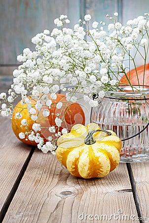 Baby s breath (gypsophilia paniculata) and colorful pumpkins