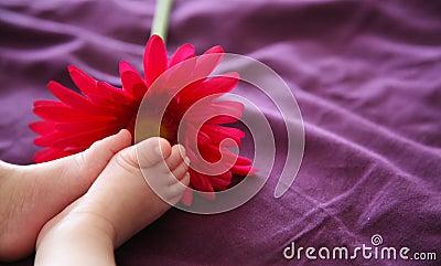 Baby s feet near a pink daisy.