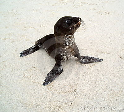 Free Baby Sea Lion Stock Images - 7353654