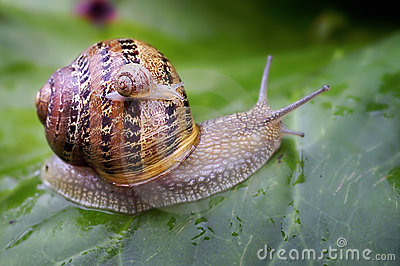 Baby snail