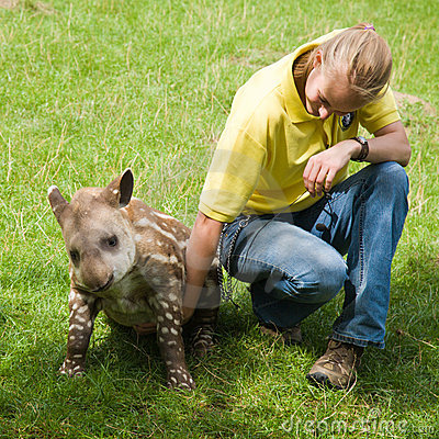 Baby tapir in Linton Zoo Editorial Photography