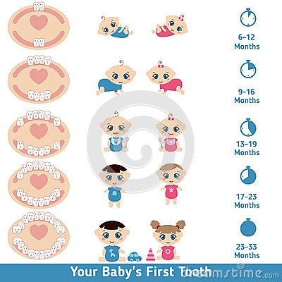 Baby Teething Chart Stock Vector - Image: 68894677