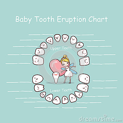 Free Baby Tooth Chart Eruption Record Stock Photography - 70470812