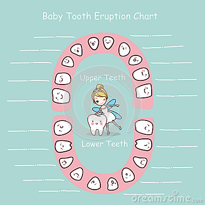 Free Baby Tooth Chart Eruption Record Royalty Free Stock Photos - 70470818
