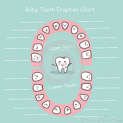 Free Baby Tooth Chart Record Stock Photography - 65181952