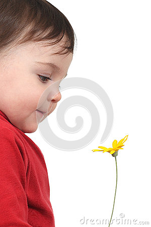 Baby watching a daisy