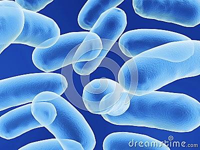 Bacilo bactérias