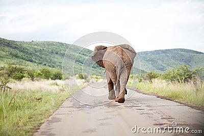 Back of elephant walking