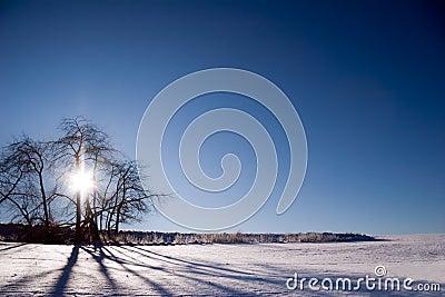 Back light winter landscape