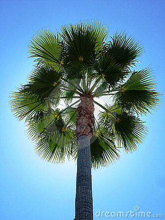 Back Lit Palm Tree