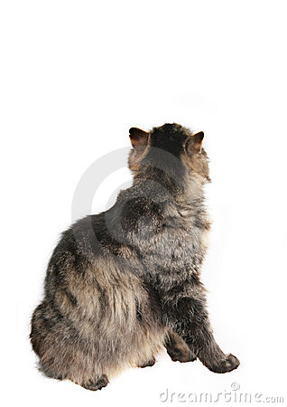Free Back Of Cat Royalty Free Stock Photo - 5256965