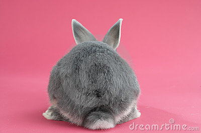 Back of a rabbit