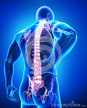 Back view of anatomy of male back pain in blue