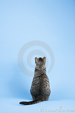 Free Back View Of Cat. Stock Image - 2045681