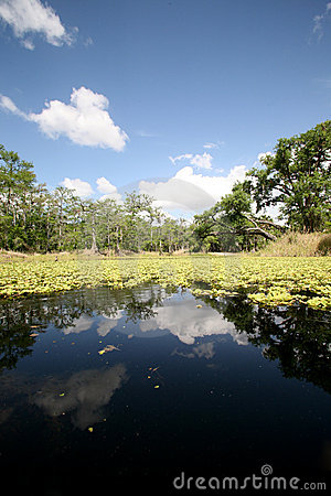 Free Back Waters Of Florida Stock Image - 4740371