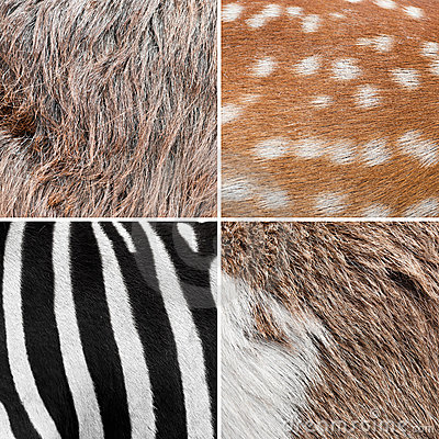 Background animal fur