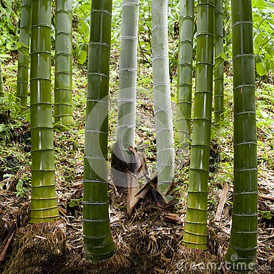 Background in bamboo