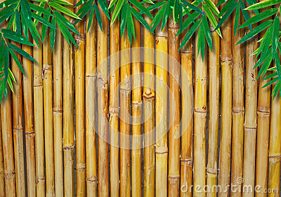 Background Of A Bamboo Fence  with bamboo-leaves
