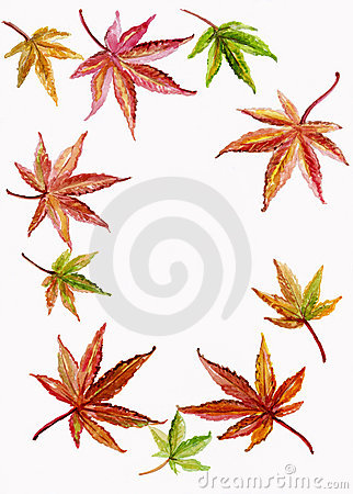 Background Border of Japanese Maple and Acer Leave