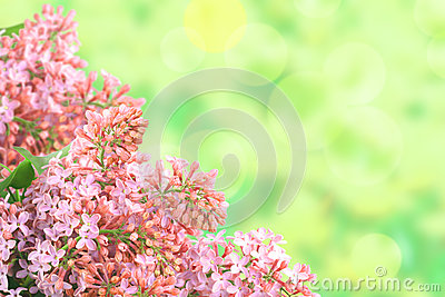 Background with branch of pink lilac
