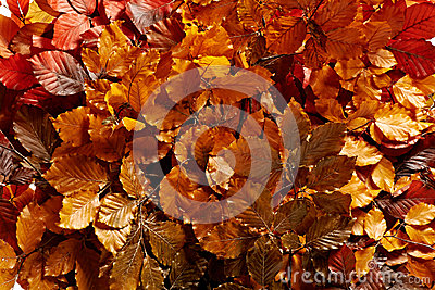 Background of bronzed autumn leaves