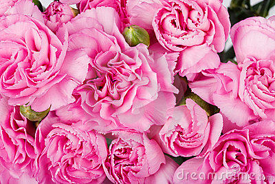 Background carnations
