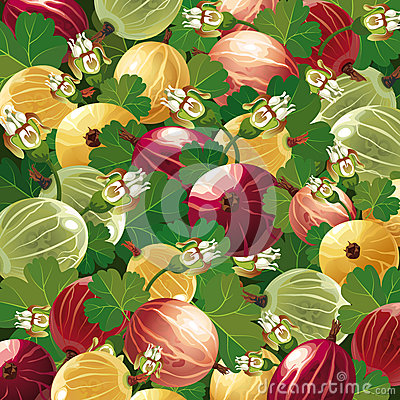 Background of colorful  gooseberry