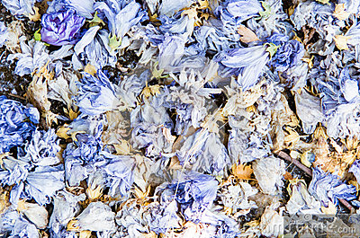 Background of colourful blue potpourri