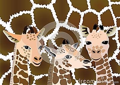 Giraffe Baby Pink / White | Online Discount Drapery