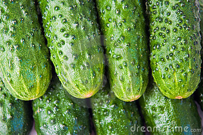 Background of the cucumbers.