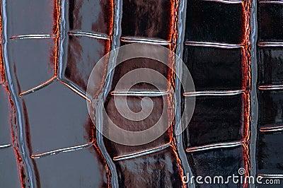 Background of dark crocodile leather